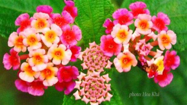 5 bài thuốc Nam trị sổ mũi, ngạt mũi mùa lạnh