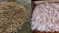 Ăn chân gà nướng: Rước bệnh vào người