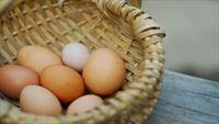 Đừng coi thường dị ứng trứng