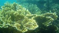 San hô biển có khả năng chống lây nhiễm HIV
