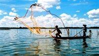 Ăn thủy sản: Cẩn thận xơ gan, ung thư mật